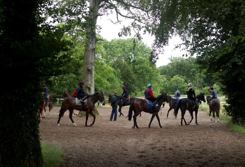 ITM Horses in Training