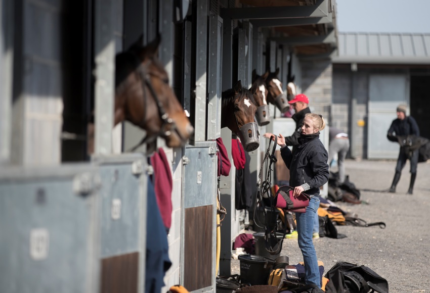 Stable Staff 1